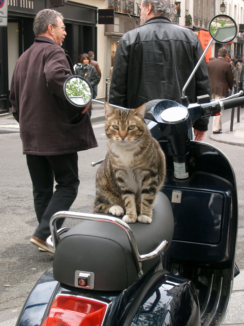 cat on vespa