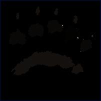 BearPaw Music Ltd. Logo